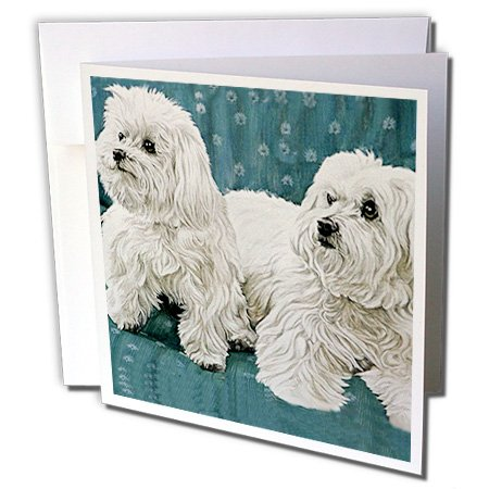 Dogs Maltese - Two Maltese - 12 Greeting Cards with envelopes (gc_698_2) (Maltese Note Cards)