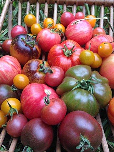 (175+ Organic Heirloom Rainbow Blend Tomato Seeds - DH Seeds - UPC0715854669517)