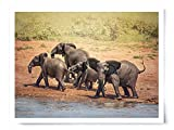 Excited Elephants by Water - Wildlife Photograph Animal Picture Home Decor Wall Nature Print - Variety of Size Available