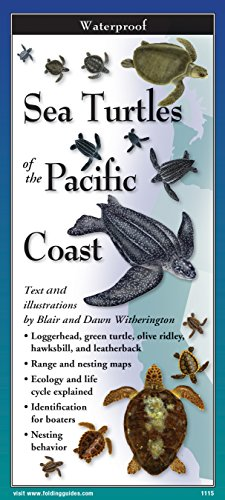 Sea Turtles of The Pacific