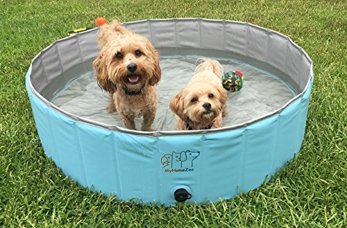 MyHomeZoo Dog Pool – Foldable and Light Weight Above Ground Swimming and Bathing Tub - Suitable for Small to Large Dogs, Cats and Other Pets – Fun for kids and (Furry Fury Cat Toy)