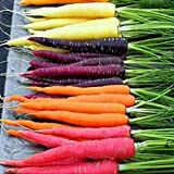 David's Garden Seeds Carrot Rainbow Blend R123NB (Multi) 500 Open Polinated Seeds