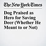 Dog Praised as Hero for Saving Deer (Whether He Meant to or Not) | Sarah Maslin Nir