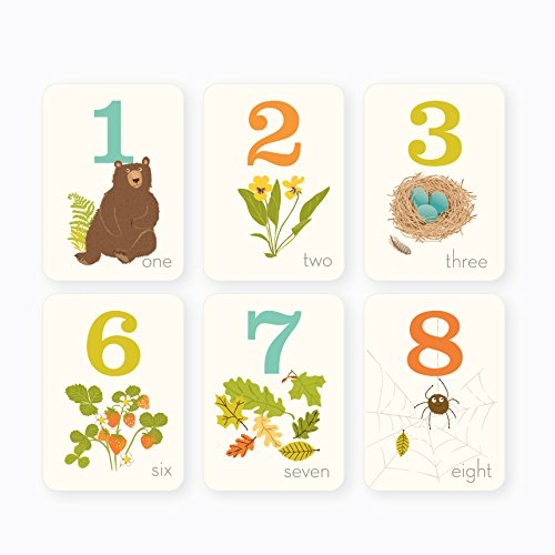 Sea Urchin Studio 1 to 10 Counting Cards, Woodland, 5