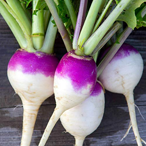 Turnips Purple Top - Outsidepride Purple Top Turnip Seed - 5 LBS
