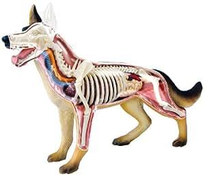 No.18 dog anatomy model Skynet three-dimensional puzzle 4D VISION animal anatomy (japan import)