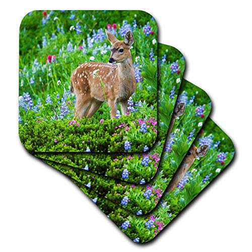 (3dRose Danita Delimont - Deer - Black-tail Deer Fawn, Cascade Wildflowers - set of 8 Coasters - Soft (cst_315167_2))