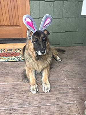 Easter Bunny Gray & Pink Rabbit Ears for Large Dogs Headband by Midlee