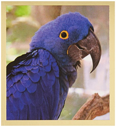 Gift Trenz Hyacinth Macaw Magnetic Bookmark
