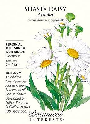 Alaska Shasta Daisy Seeds - 250 mg - Perennial
