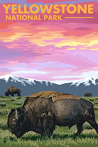 Yellowstone National Park, Wyoming - Bison and Sunset (12x18 Art Print, Wall Decor Travel Poster)