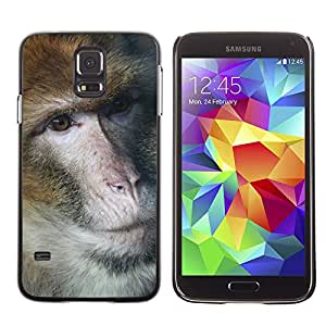 GoGoMobile Slim Protector Hard Shell Cover Case // M00124222 Monkey Barbary Ape Portrait Eyes Fur // Samsung Galaxy S5 S V SV i9600 (Not Fits S5 ACTIVE)