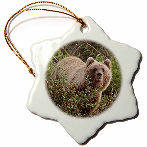Rose Porcelain Stove - 3dRose orn_141977_1 Arctic Grizzly Bear, Brooks Range, Alaska, Usa-Us02 Hro0736-Hugh Rose-Snowflake Ornament, 3-Inch, Porcelain