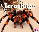 Tarantulas, Jeni Wittrock, 1476524580