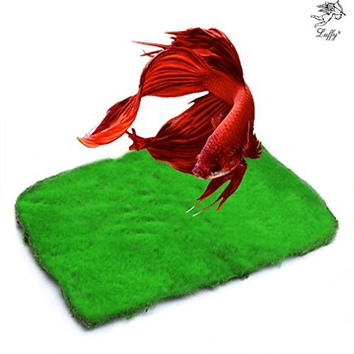 (Betta Carpet - Soft Moss for Betta to Rest, Layover - Lush Green Landscape in Aquarium - Natural Habitat for Betta - Create a Moss Carpet or Moss Wall - Thrive with Minimal Care)