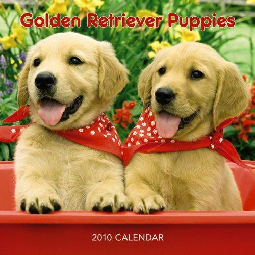 Golden Retriever Puppies 2010 Mini Wall