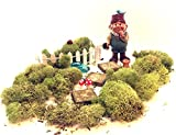 Gnome Garden Kit – Boy Gnome with 11 Miniature Fairy Garden Accessories and Moss For Sale