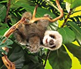 Folkmanis Baby Sloth Puppet, Baby & Kids Zone