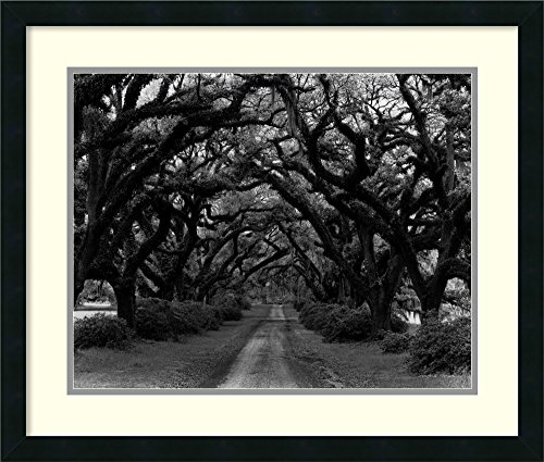 Framed Art Print, 'Path in the Oaks #2, Louisiana' by Monte Nagler: Outer Size 26 x 22