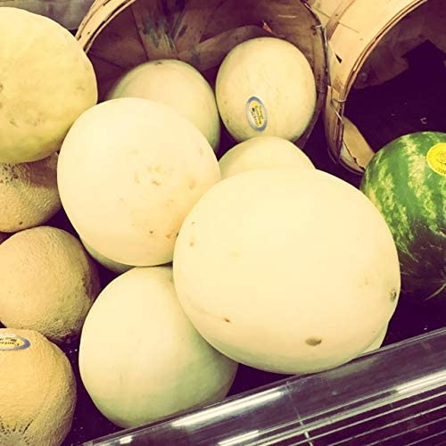 Honeydew Orange Flesh Organic Highyielding Organic Vegetable Fruits Seeds Exotic Hardy Perennial Garden 20pcs Rare Melon