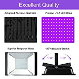 UV Blacklight for Parties 10ft Power Cords IP66