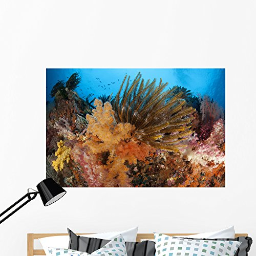 Wallmonkeys Colorful Crinoids and Soft Wall Mural by Peel and Stick Graphic (48 in W x 32 in H) WM346955