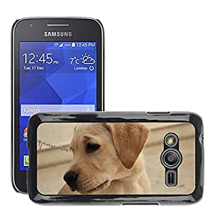 Super Stella Slim PC Hard Case Cover Skin Armor Shell Protection // M00107990 Labrador Pet Dog Animal Purebred // Samsung Galaxy Ace4 / Galaxy Ace 4 LTE / SM-G313F