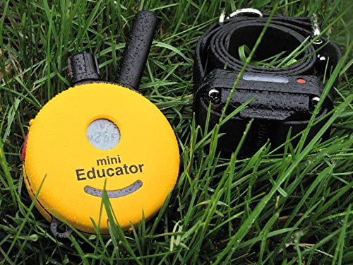 Best Dog Training e Collar - Educator Einstein Remote Trainer - Mini Educator 1/2 Mile Remote Trainer ET-300TS WaterProof - Vibration Tapping Sensation With eOutletDeals Postcard Magnet Calendar by E-Collar Dog Trainer (Image #4)