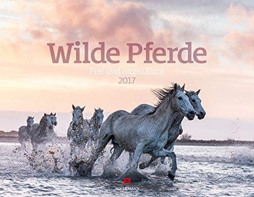 wilde-pferde-2017