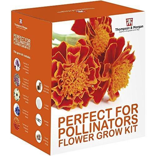 Perfect for Pollinators Seed Growing Kit Gift Box – 5 Bee Friendly Flourishing Flowers to Grow; Verbena Bonariensis, Foxglove, Calendula, Cornflower & Marigold Seeds by Thompson & Morgan