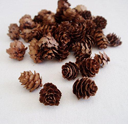 Hemlock Pine cones 3oz bag Small Pine cones Vase filler (Pine Cone Vase)