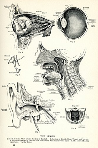 Human Senses Diagram Illustration Vintage Educational Chart Poster 12x18 - Nose Diagram Anatomy