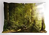 K0k2t0 Nature Pillow Sham, Sunny Rainforest with Wood Bench in Olympic National Park Washington USA Photo, Decorative Standard Queen Size Printed Pillowcase, 30 X 20 Inches, Green Yellow