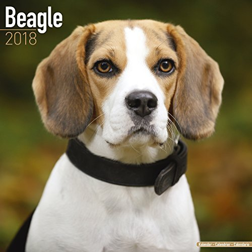 Beagle Calendar 2018 - Dog Breed Calendar - Premium Wall Calendar 2017-2018