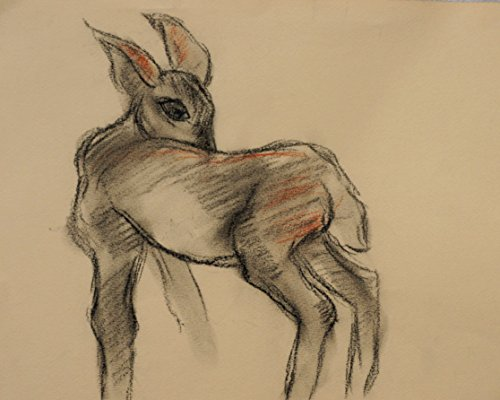 Original Charcoal and Conte on paper drawing, Baby Deer