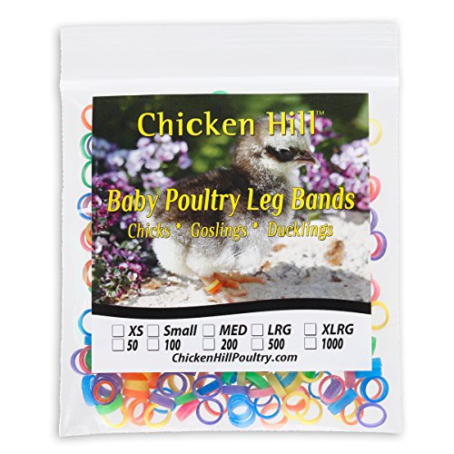 Baby Poultry Leg Bands 1/4 Medium Chick (100)
