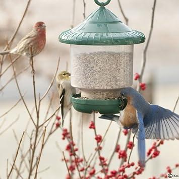 Amazon Songbird Essentials SE7012 Clinger ly Bird Feeder