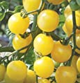 David's Garden Seeds Tomato Cherry White D297A (Yellow) 50 Organic Seeds