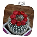3dRose Edmond Hogge Jr – Flowers - Flowering Cactus - 8x8 Potholder (phl_214752_1)