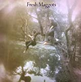 Fresh Maggots Hatched
