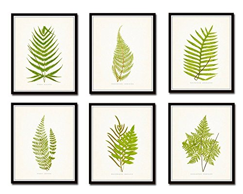 Vintage Ferns Botanical Print Set No.1 Set of 6 Giclee Fine Art Prints - Unframed