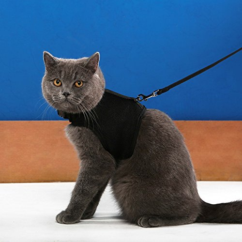 Niteangel 2-Pack of Adjustable Cat Harness with Elastic Leash (M & L, Black)