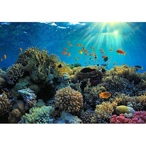 Coral Reef Murals - wall26 - Beautiful View of Sea Life - Removable Wall Mural | Self-adhesive Large Wallpaper - 100x144 inches