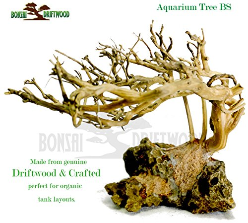 Bonsai Driftwood Aquarium Tree (5 Inch Height) Natural, Handcrafted Fish Tank Decoration | Helps Balance Water pH Levels, Stabilizes Environments | Easy to Install by Bonsai Driftwood (Image #4)