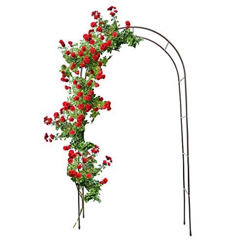 Rose Arch - 9