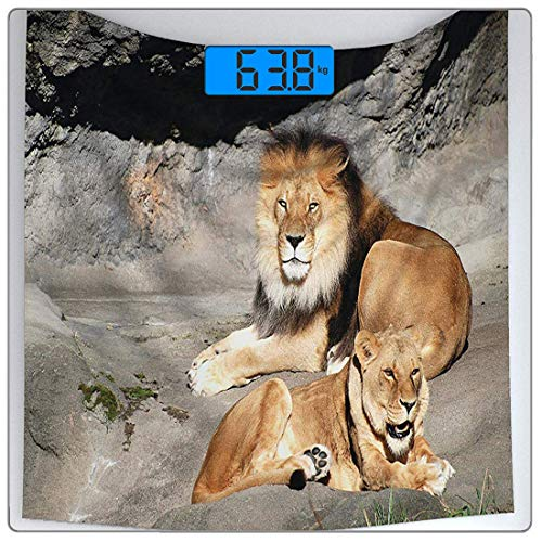 Precision Digital Body Weight Scale Zoo Ultra Slim Tempered Glass Bathroom Scale Accurate Weight Measurements,Male Female Lions Basking in The Sun Wild Cats Habitat King Jungle,Blush White ()