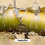 Banyan Botanicals Kanchanar Guggulu - USDA