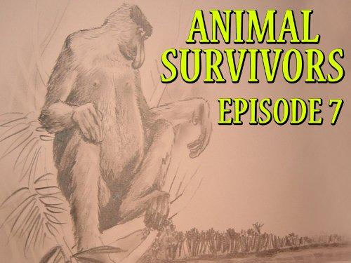 Mandrill Animal - Episode 7