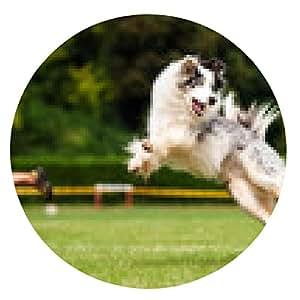 alfombrilla de ratón perro Border collie coger el disco volador en salto - ronda - 20cm