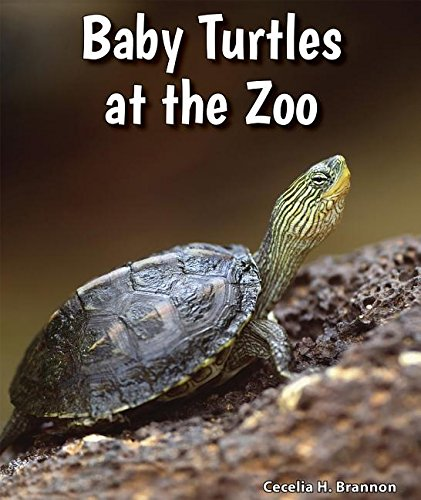Baby Turtles at the Zoo (All about Baby Zoo Animals) ebook